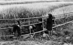 Crianças em vila ao norte do Vietnã, anos 2000 - No final dos anos 60 este país foi palco de uma guerra que chocou interesses das potências comunistas e capitalistas em plena Guerra fria.  <br/> <br/> Palavras-chave: poder, política, ideologia, guerra fria, vietnã, imperialismo norte americano.