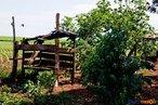 Construção rústica tendo um latifúndio ao fundo <br/> Detalhe de acampamento do MST às margens de grandes latifúndios de soja - 2008, na luta por assentamentos, reforma agrária e transformações sociais. <br/> Há 25 anos atrás, em Cascavel (PR), surgiu o MST unindo posseiros, atingidos por barragens, migrantes, meeiros, parceiros e pequenos agricultores. Desde sua fundação, o Movimento Sem Terra se organiza em torno de três objetivos principais: Lutar pela terra; Lutar por Reforma Agrária; Lutar por uma sociedade mais justa e fraterna. <br/> <br/> Palavras-chave: Movimentos sociais, MST, acampamento, assentamento, direito, reforma agrária, trabalhadores rurais, camponeses, democracia, função social da terra, cidadania, movimentos agrários no Brasil.